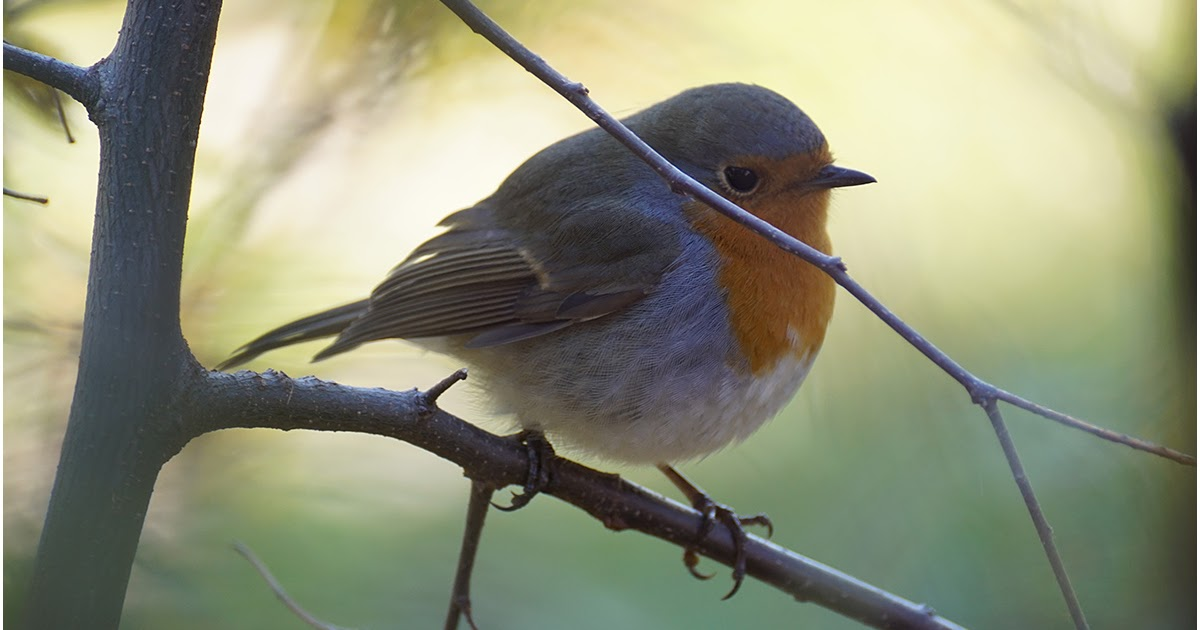 птицы краснодарского края фото и описание гладких или