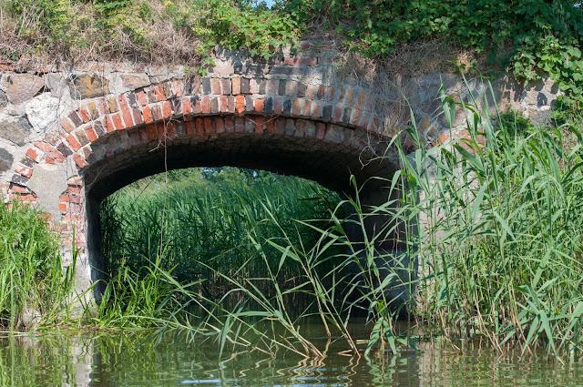 kajaki, szlak konwaliowy, spływ kajakowy, kanał Błotnicki, trzciny