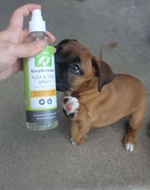 Keep Flea & Ticks Away With This EasyDefense Flea & Tick Spray