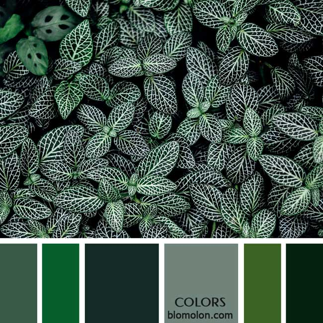 variedad_en_color_paletas_de_colores_11