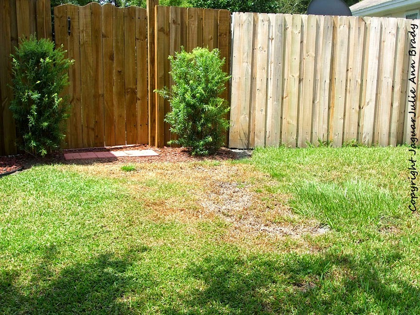 front yard accent garden area before photo