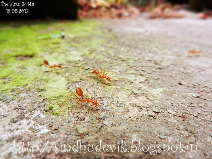 A few red ants in focus