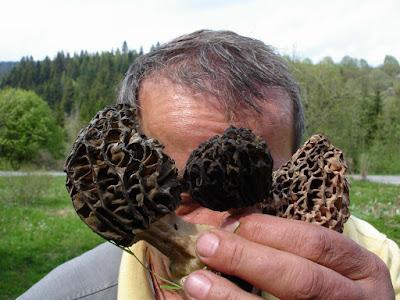 grzyby wiosenne, grzyby w marcu, grzyby w kwietniu, grzyby w maju, wiosenne grzybobranie, grzybobranie na Orawie, gdzie i kiedy szukać smardzów, smaczne grzyby wiosenne, smardz stożkowy. Morchella conica