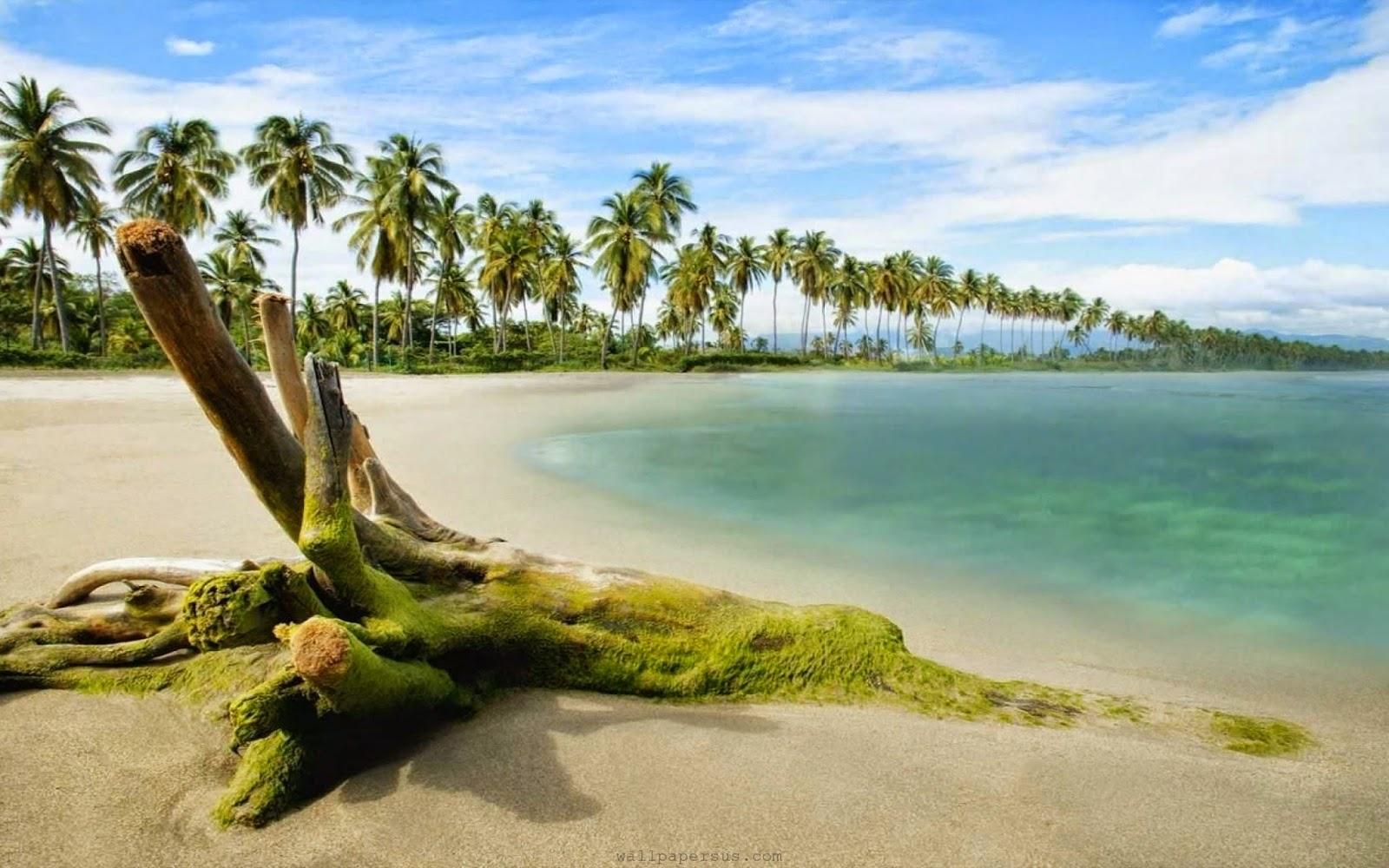 Pohon Palem-Alam-Pantai-Gambar