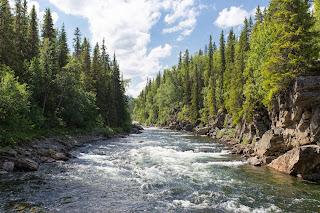 Río corriendo entre árboles