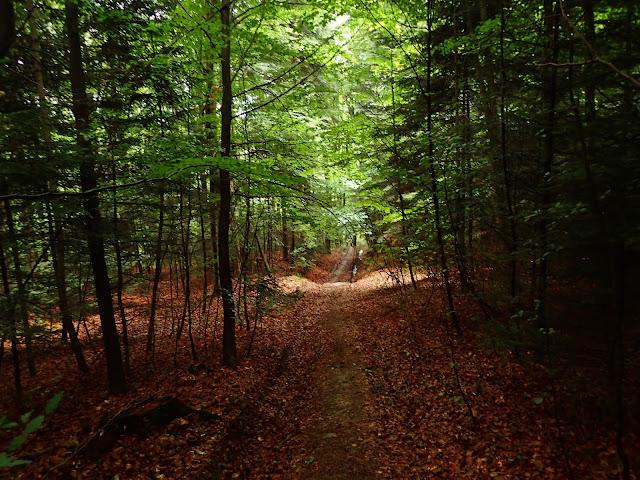 Dalej początek szlaku, tu sporo liści