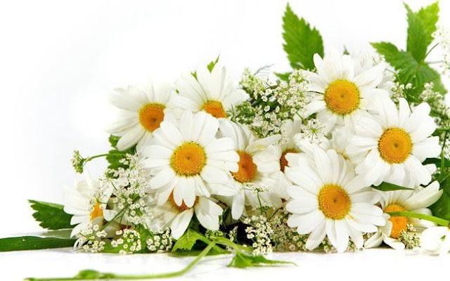 hoa đẹp nhất thế giới 3