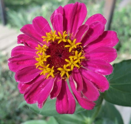 Zinnia Arts And Crafts Cut Out