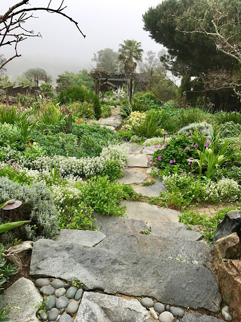 lush garden path leading into fog