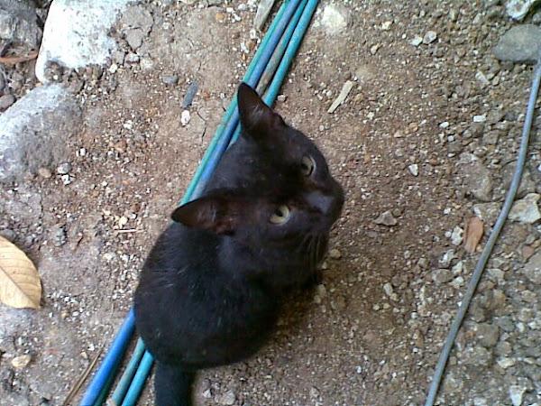 Cerita Kucing