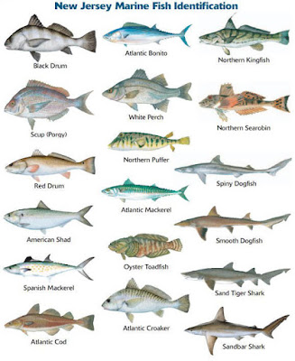 How to improve your situational awareness with natural for Saltwater fish species