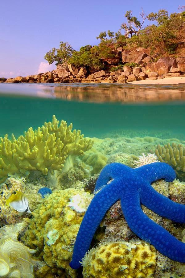 Blue Starfish, Lizard Island, Great Barrier Reef