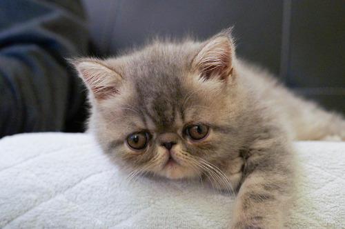 Alone Cute Baby Wallpaper Lavebeli Cat Tumblr S You Should Be Following