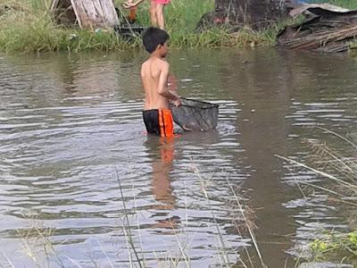 mudpond harvest