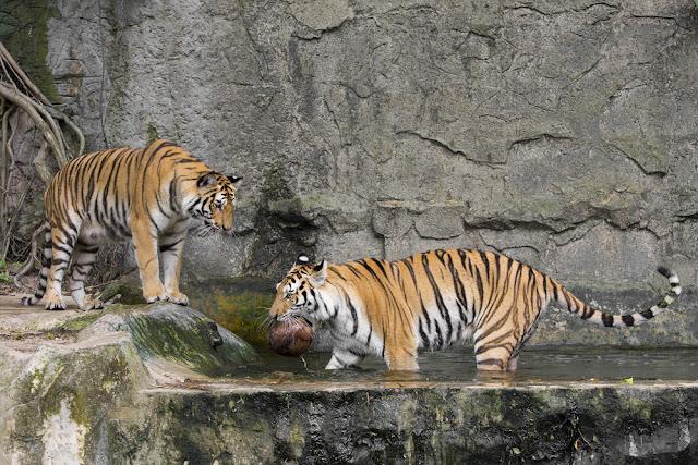 Bandhavgarh Wildlife Sanctuary