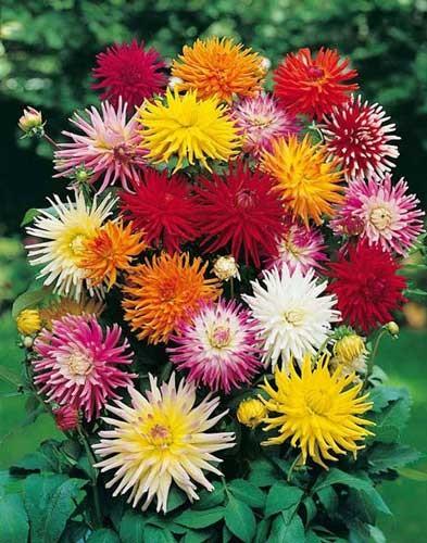 fiori simili a margherite