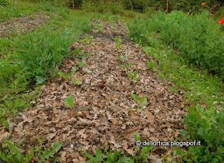 pomodori dell orto della fattoria didattica dell ortica a savigno valsamoggia bologna vicino a Zocca