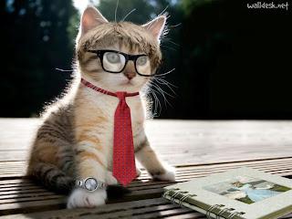 Resultado de imagem para bicho gata siamesa na poltrona