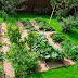 Ці 10 копійчаних аптечних засобів творять чудеса в городі і квітнику