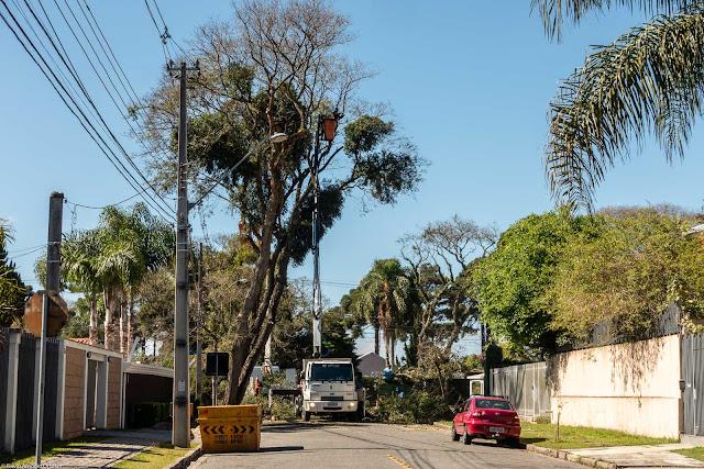 Trabalhadores podando árvore