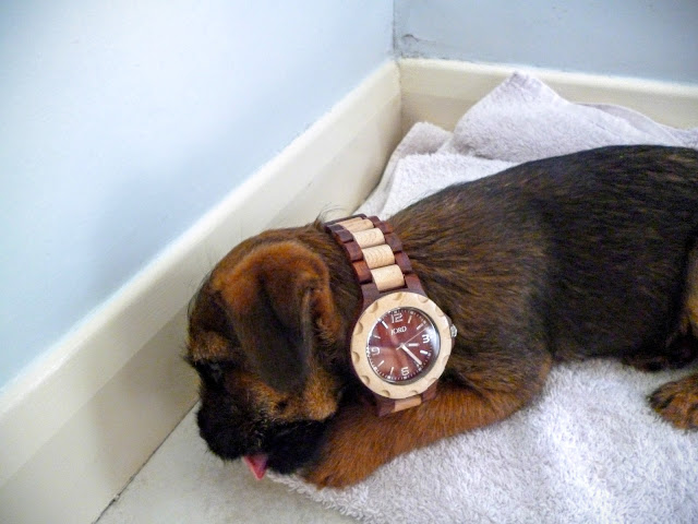 small puppy wearing a wooden watch as a collar