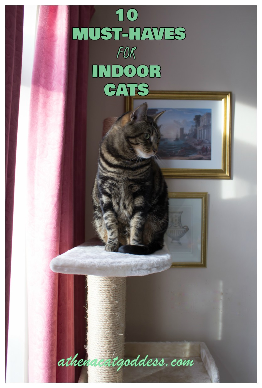 Athena Cat Goddess Wise Kitty Top 10 Must Haves For Your Indoor Cats In 2018