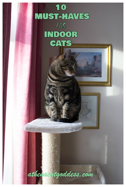 10 Must-Haves for Your Indoor Cat