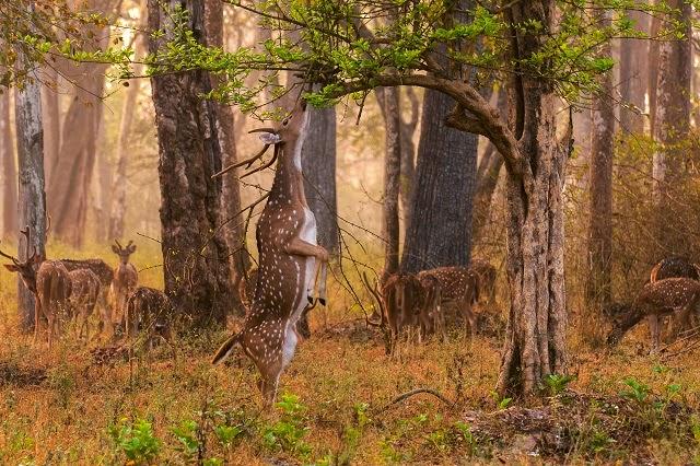 Sundarbans National Park - UNESCO world heritage site