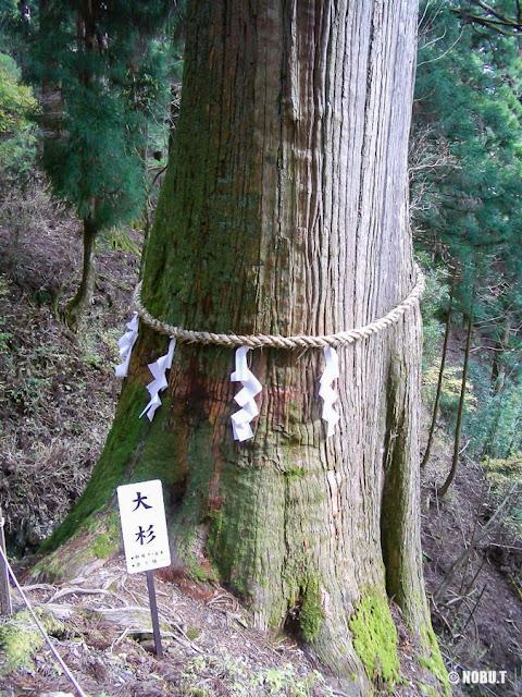 奈良県十津川村「玉置神社」の大杉