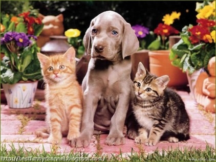 Two kittens and puppy.