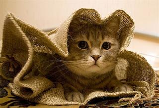 кот в мешке от Наташи