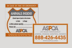 Image: Free Pet Safety Pack