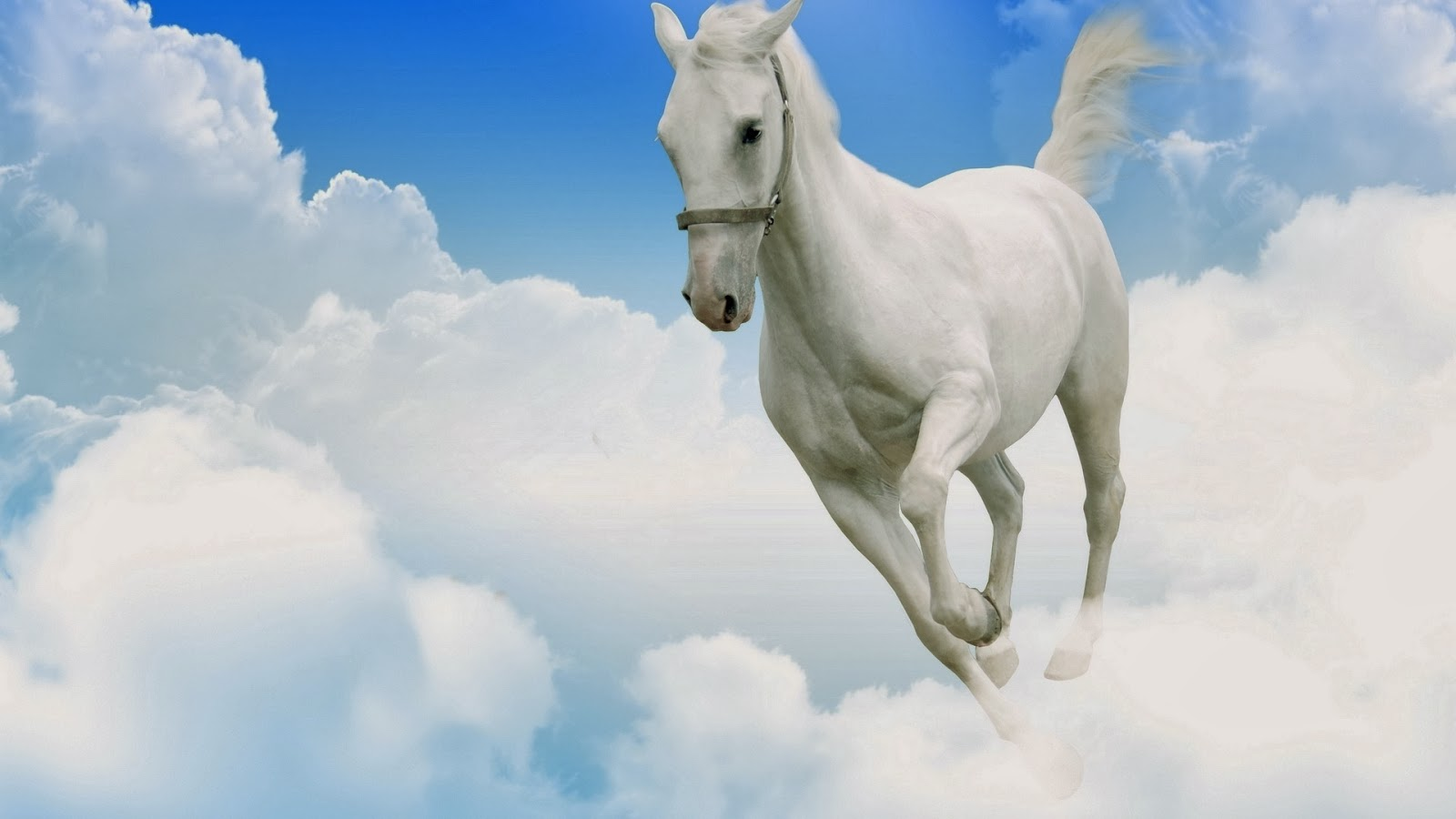 White Horse Wallpapers - beautiful desktop wallpapers 2014