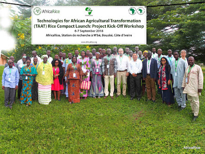 Rice Value Chain Compact of AfDB-funded TAAT