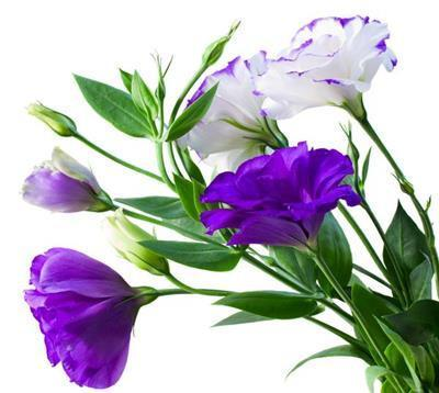 hoa cat tuong dep nhat 4