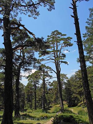 Día Internacional de los Bosques 2017