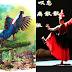 CWNTP 【水•彩】生態多媒體劇場 製作人夏學理將嘉義縣鳥藍腹鷴化入劇中 合鳴共舞
