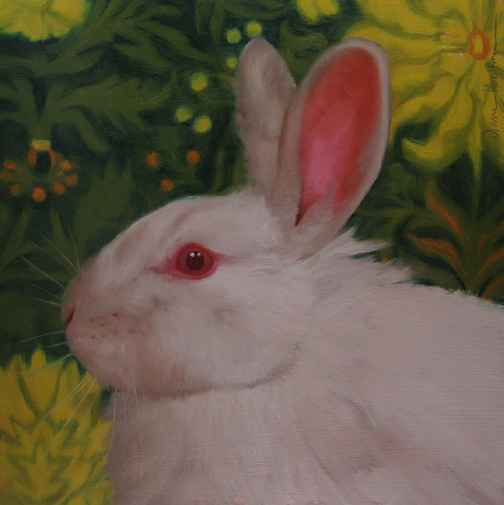 White Bunny and the Richeson75 Animals, Birds & Wildlife Competition