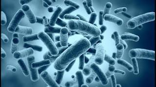 Propionibacterium acnes