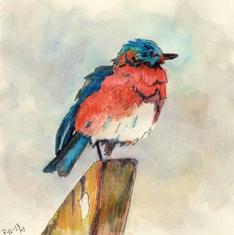 Kaysmithbrushworks Bluebird Inktense Sketchink Images