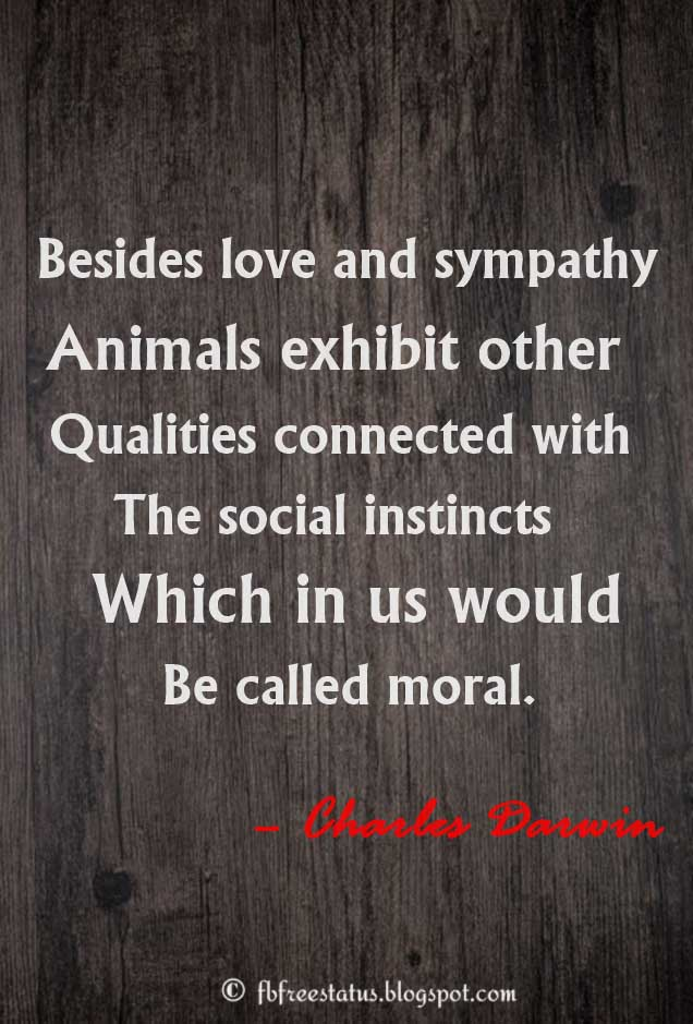 �Besides love and sympathy, animals exhibit other qualities connected with the social instincts which in us would be called moral.� � Charles Darwin Quotes about Sympathy