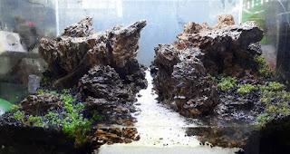 cara menanam tanaman moss dengan sistem kering