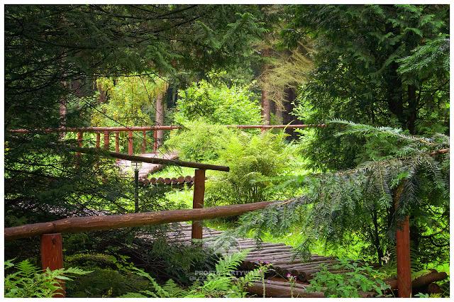 W leśnym arboretum nieopodal Lądka Zdroju