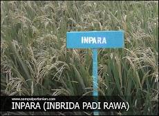 Pengertian INPARA (Inbrida Padi Rawa)