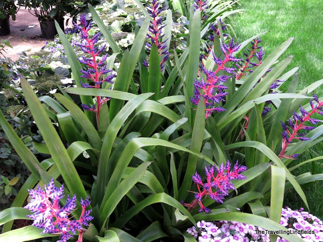 Bromeliad at Longwood