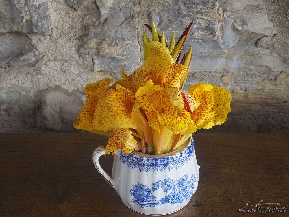 """Composición Pieza de loza antigua en este caso azucarera con asa rota y con flores de canna de la variedad """"Cleopatra"""""""