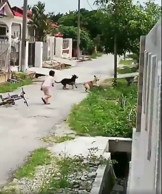Brave Kid Chases Dog / Facebook