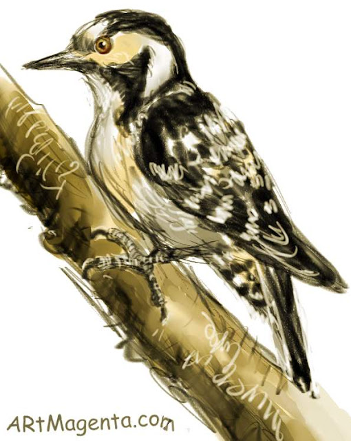 Lesser Spotted Woodpecker sketch painting. Bird art drawing by illustrator Artmagenta.