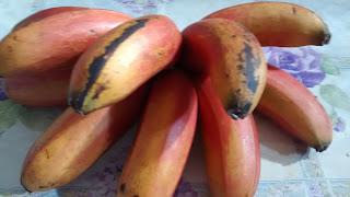 Banana roxa, banana vermelha, banana são tomé