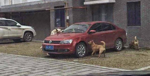 Hombre patea a perro y este regresa con amigos por venganza